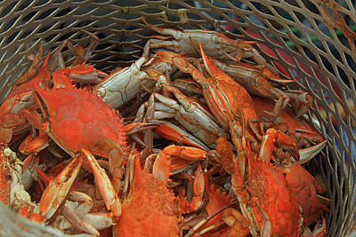 Louisiana Boiled Crabs Art Print