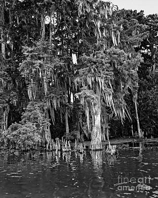 Photograph - Louisiana Swamp 3 by David Doucot