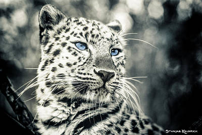 Photograph - Love Panther by Stwayne Keubrick