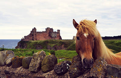 Bw Photograph - Lovely Horse And Tantallon Castle by RicardMN Photography