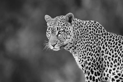 Photograph - Lovely Leopard by Michele Burgess