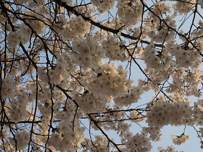 Hyatt Hotel Photograph - Low Angle View Of Cherry Blossom by Panoramic Images