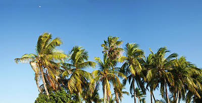 Low Angle View Of Palm Trees Art Print by Panoramic Images