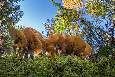 Forest Floor Photograph - Low Wide Angle View Of Mushrooms by Adam Jones