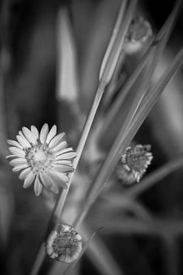 Loxahatchee Flower Art Print by Bradley R Youngberg