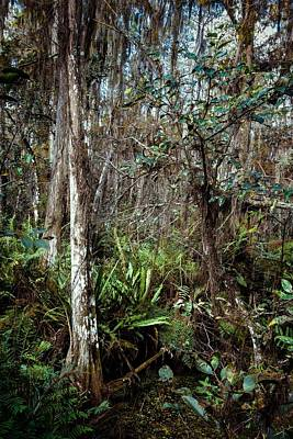 Cypress Swamp Photograph - Loxahatchee Refuge by Rudy Umans