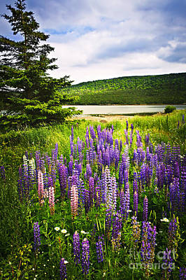 Hill Photograph - Lupin Flowers In Newfoundland by Elena Elisseeva
