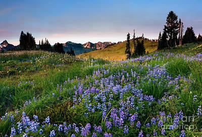 Meadow Photograph - Lupine Sunrise by Mike Dawson
