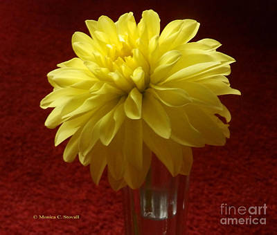 Photograph - M Still Life Collection Yellow Flower Clear Vase Red No. Slc19 by Monica C Stovall