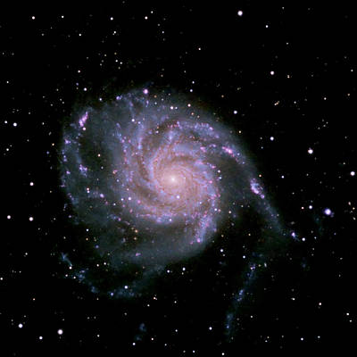 Photograph - M101 The Pinwheel Galaxy by Alan Vance Ley