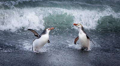 Water Play Photograph - Macquarie Island, Australia by Janet Muir