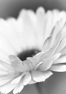 Photograph - Macro Daisy Flower Monochrome by Jennie Marie Schell
