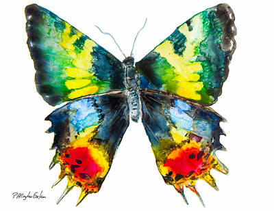 Patricia Mixed Media - Madagascan Sunset Moth by Patricia Allingham Carlson