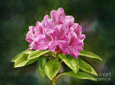 Magenta Rhododendron With Background Art Print by Sharon Freeman