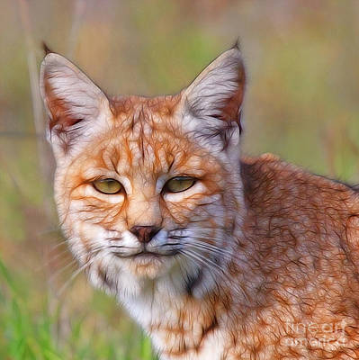 Photograph - Magical Bobcat by Beth Sargent