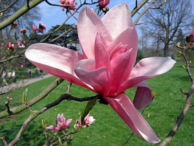 Photograph - Magnolia 4 by Helene U Taylor