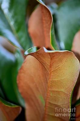 Photograph - Magnolia Leaf Closeup by Maria Urso