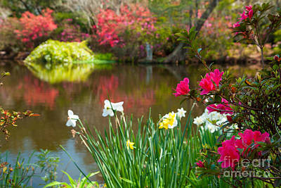 Magnolia Plantation And Gardens Art Print by Iris Greenwell
