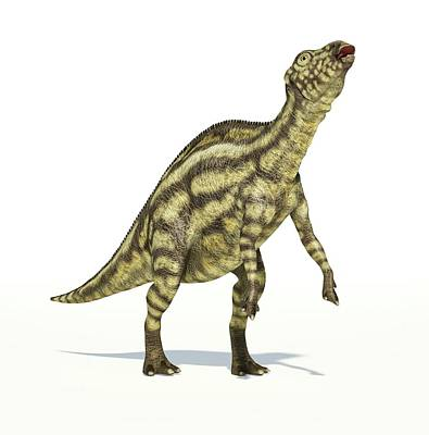 Prehistorical Photograph - Maiasaura Dinosaur by Leonello Calvetti