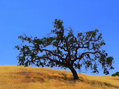 Photograph - Majestic California Oak by Jeff Lowe