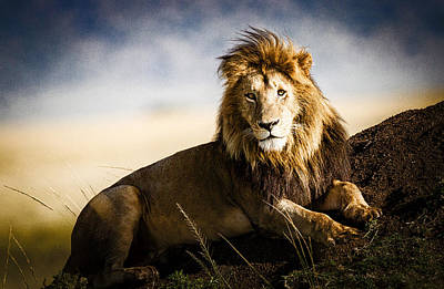 Lion Photograph - Majestic Male On Mound by Mike Gaudaur