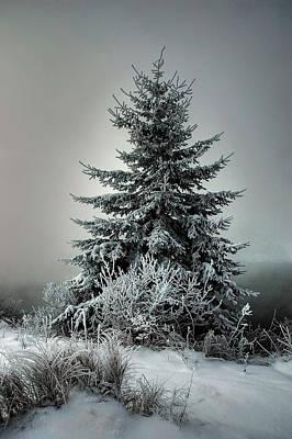 Majestic Winter Art Print by Heather  Rivet