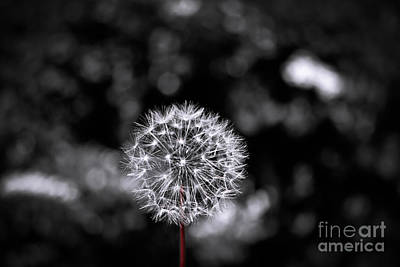 Photograph - Make A Wish by Colleen Kammerer