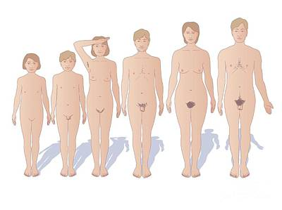 Male And Female Sexual Maturation Art Print by Peter Gardiner