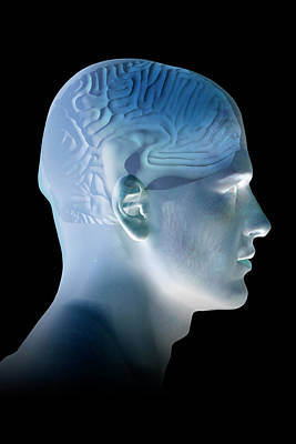 Human Head Photograph - Male Head by Carol & Mike Werner