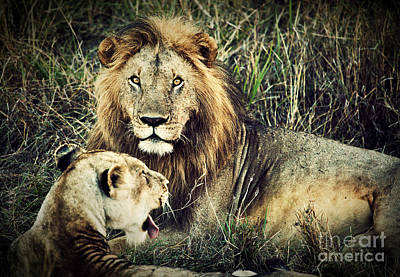 Male Lion And Female Lion. Safari In Serengeti. Tanzania. Africa Art Print by Michal Bednarek