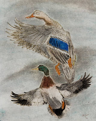 Steele Drawing - Mallard Pair by Chris Steele