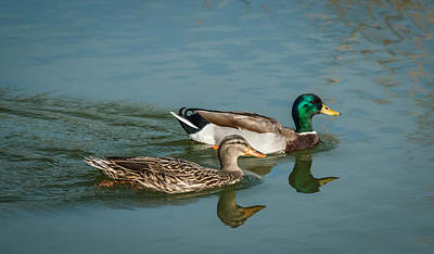 Photograph - Mallard Pair by Jane Luxton