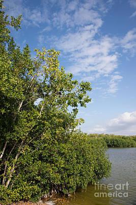 Mangrove Forest Digital Art - Mangrove Forest by Carol Ailles
