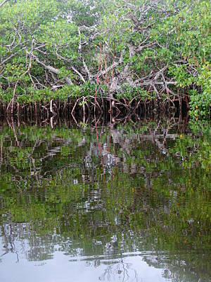 Photograph - Mangrove by Frederic BONNEAU Photography