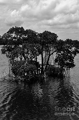 Mangrove Island Art Print by Andres LaBrada