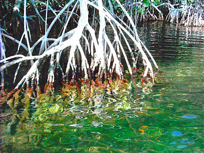 Photograph - Mangrove Roots Filtered 2 by Duane McCullough