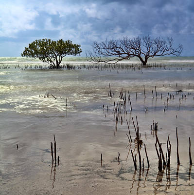 Mangrove Tree In Blurred Sea Print by Dirk Ercken