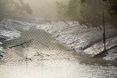 Mangroves In The Sunderbans Art Print by Ashley Cooper