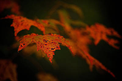 Negative Space - Maple leaves by Prince Andre Faubert