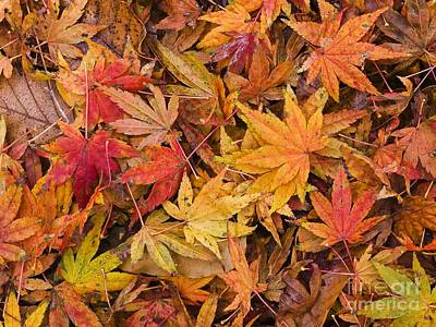 Photograph - Maple Leaves On Ground by Adrian Bicker