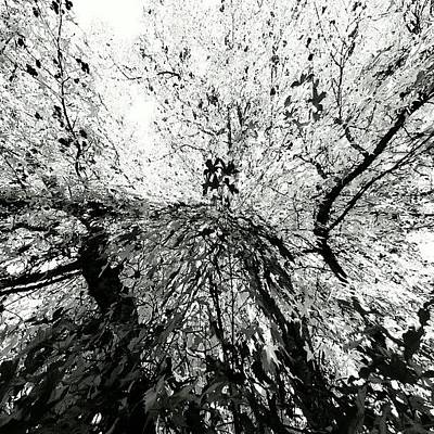 Monochrome Photograph - Maple Tree Inkblot by CML Brown