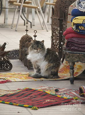 Photograph - Marrakesh Cat by Louise Fahy