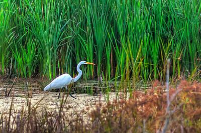 Photograph - Marsh Hunter by Scott Hansen