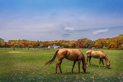 Maryland Pastures Art Print