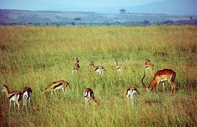 Masai Mara Art Print