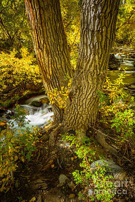 Photograph - Mcgee Creek 4 by Alexander Kunz