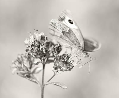 Photograph - Meadow Brown by Steven Poulton