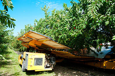 Shaking Photograph - Mechanical Harvester Shaking Cherry by Panoramic Images