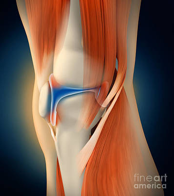 Human Joint Digital Art - Medical Illustration Showing by Stocktrek Images