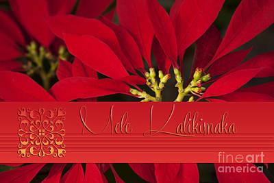 Mele Kalikimaka - Poinsettia  - Euphorbia Pulcherrima Art Print by Sharon Mau